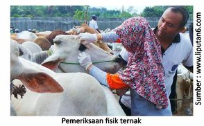 Pentingnya Penanganan Ternak Selama Transportasi