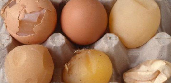 Vaksinasi EDS dan Produksi Telur