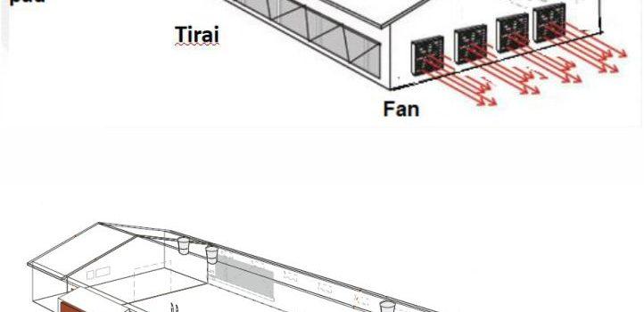 Mengenal Kandang Closed House untuk Layer Modern